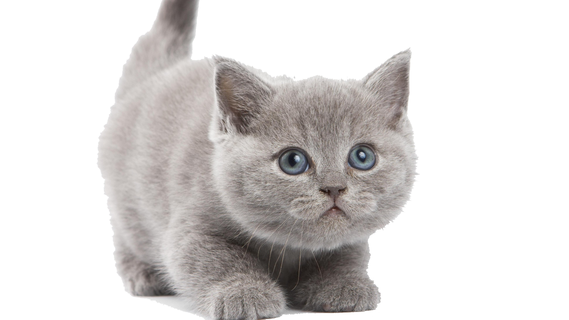 briar-core/src/main/resources/kitten6.png